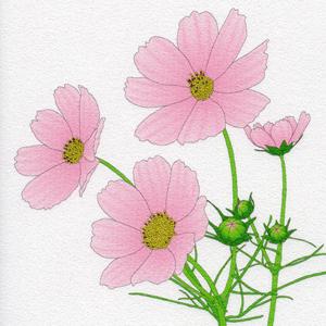 岩崎健一&岩崎航『いのちの花、希望のうた 画詩集』